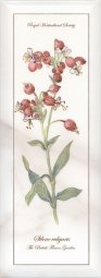 Декор Kerama Marazzi Ноттингем Цветы NT\A87\15005 15х40