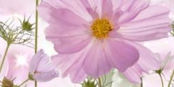 Декор Нефрит-керамика Эльза 04-01-1-10-05-85-168-2 50x25 Розовый