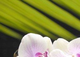Панно Береза-керамика Азалия Орхидея 1 фисташковый 25x35