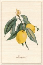 Декор Kerama Marazzi Ботаника Лимон A2210\8164 20х30